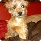 Adopt A Pet :: Cabo