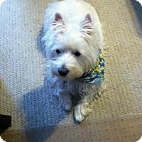 Adopt A Pet :: Amelie - Frisco, TX