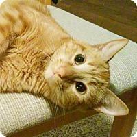 Adopt A Pet :: Clementine - Austin, TX