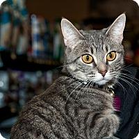Adopt A Pet :: Zaniya - Edmonton, AB