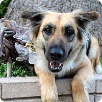 Adopt A Pet :: Sandy - Cat Friendly - Los Angeles, CA