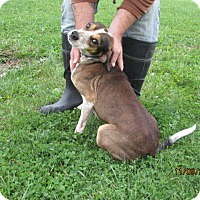 Adopt A Pet :: Travis - Mount Sterling, KY