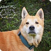 Adopt A Pet :: Preston - Fort Valley, GA