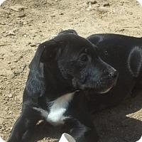 Adopt A Pet :: Nellie meet me 4/1 - Manchester, CT