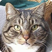 Adopt A Pet :: Bailey - Albany, NY