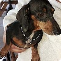 Adopt A Pet :: Pepper - Humble, TX