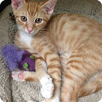 Adopt A Pet :: Trisha - Putnam Hall, FL