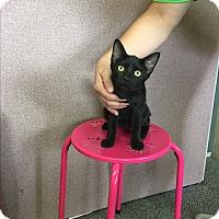 Adopt A Pet :: Juniper - Rochester, MN