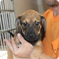 Adopt A Pet :: Izzy - Harmony, Glocester, RI