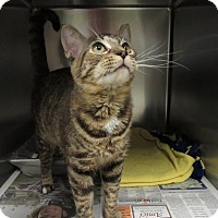 Adopt A Pet :: Sister - Windsor, VA
