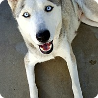 Adopt A Pet :: Trina - Apple valley, CA
