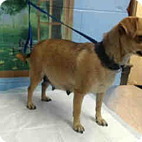 Adopt A Pet :: URGENT ON 12/16 San Bernardino - San Bernardino, CA