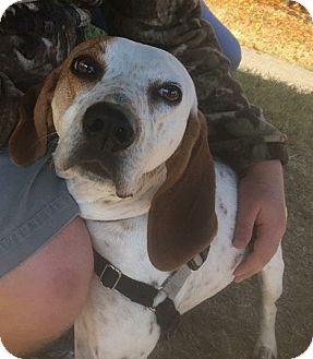 Hound (Unknown Type) Mix Dog for adoption in Bryson City, North Carolina - Becky