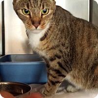 Adopt A Pet :: Parker - Westminster, CA