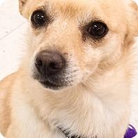 Adopt A Pet :: Lucky - Monrovia, CA