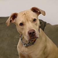 Adopt A Pet :: Cinderella - Brookhaven, NY
