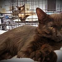 Adopt A Pet :: Inky - Fairborn, OH