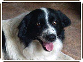 Adopt A Dog Breaux Bridge