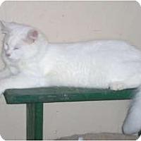 Adopt A Pet :: Higgins - Marion, WI