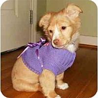 Adopt A Pet :: Darci - Mooy, AL