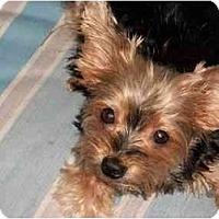 Adopt A Pet :: Sassy - Gulfport, FL