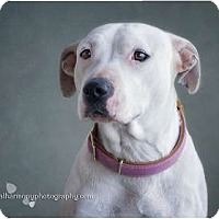 Adopt A Pet :: HOPE - Phoenix, AZ