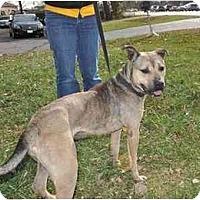 Adopt A Pet :: Hooch - Chicago, IL