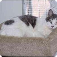 Adopt A Pet :: Susie - San Pedro, CA