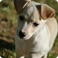 Adopt A Pet :: Peeta - Austin, TX