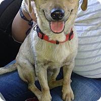 Adopt A Pet :: Franco - Apple Valley, CA