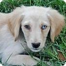Adopt A Pet :: Ridge B