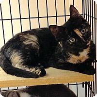 Adopt A Pet :: Summer - East Brunswick, NJ