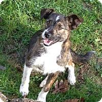 Adopt A Pet :: Mollie 2 - Georgetown, KY