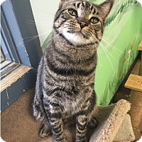 Adopt A Pet :: Freddy - Cody, WY