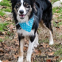 Adopt A Pet :: Zach - All Cities, SC