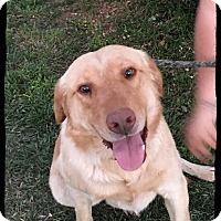 Adopt A Pet :: County - Old Saybrook, CT
