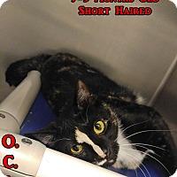 Adopt A Pet :: B-8 - Triadelphia, WV