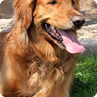 Adopt A Pet :: Missy (PLACED) Adoption_Pending - Glendale, AZ