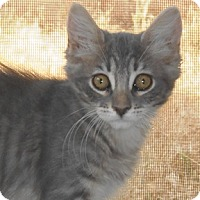 Adopt A Pet :: Birah - North Highlands, CA