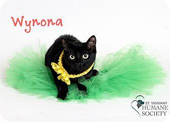 Domestic Shorthair Kitten for adoption in Covington, Louisiana - Wynona