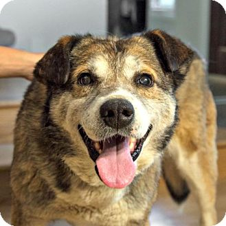 Shepherd (Unknown Type) Mix Dog for adoption in Edmonton, Alberta - Morgan Freeman