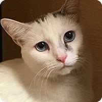 Adopt A Pet :: Adelena - Mesa, AZ