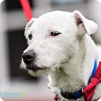 Adopt A Pet :: Chico - foster or adopt - San Francisco, CA