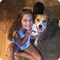 Adopt A Pet :: Tillie - East Sparta, OH