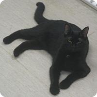 Adopt A Pet :: Sophia - Gary, IN