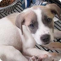 Adopt A Pet :: Daisy - Clear Lake, IA