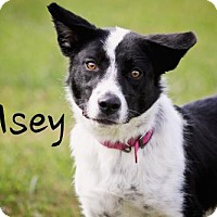 Adopt A Pet :: Kelsey - Joliet, IL