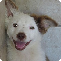 Adopt A Pet :: Angel - Hagerstown, MD