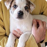 Adopt A Pet :: Etta - Burbank, OH