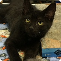 Adopt A Pet :: Luigi - Bonner Springs, KS